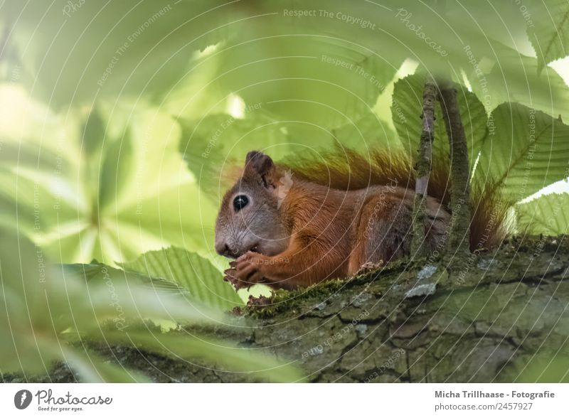 Nature Green Sun Tree Animal Leaf Forest Eating Yellow Eyes Small Orange Illuminate Nutrition Wild animal To enjoy