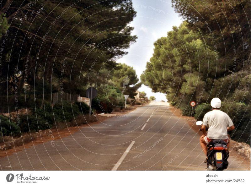 Tree Summer Vacation & Travel Street Mountain Tall Trip Upward Avenue Scooter Majorca Motorcycle