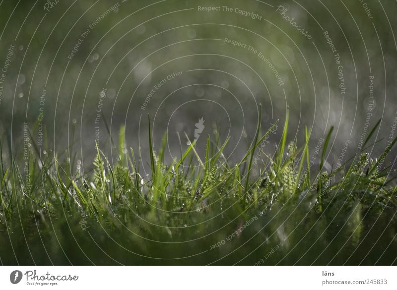 Summer 2011 Drops of water Rain Grass Wet Green Blade of grass Variable Colour photo Exterior shot Deserted Day Light Shadow Contrast Light (Natural Phenomenon)