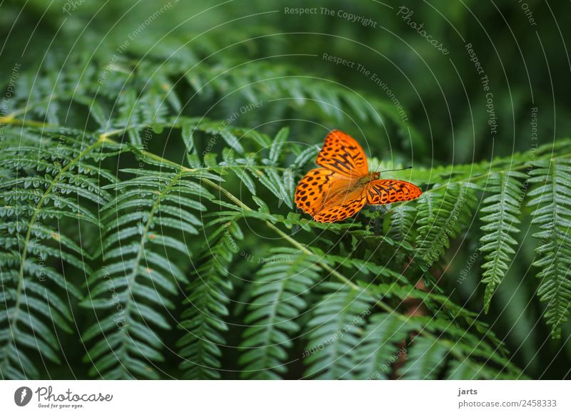 favourite animal Plant Animal Spring Summer Beautiful weather Fern Forest Wild animal Butterfly 1 Sit Natural Green Orange Serene Calm Nature
