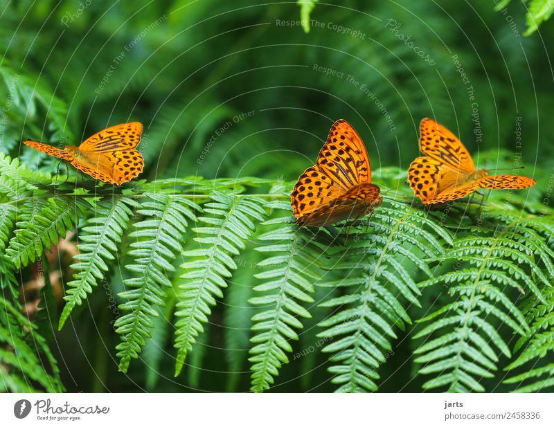 in threes Plant Animal Summer Beautiful weather Fern Forest Wild animal Butterfly 3 Group of animals Sit Exotic Free Green Orange Loyalty Nature