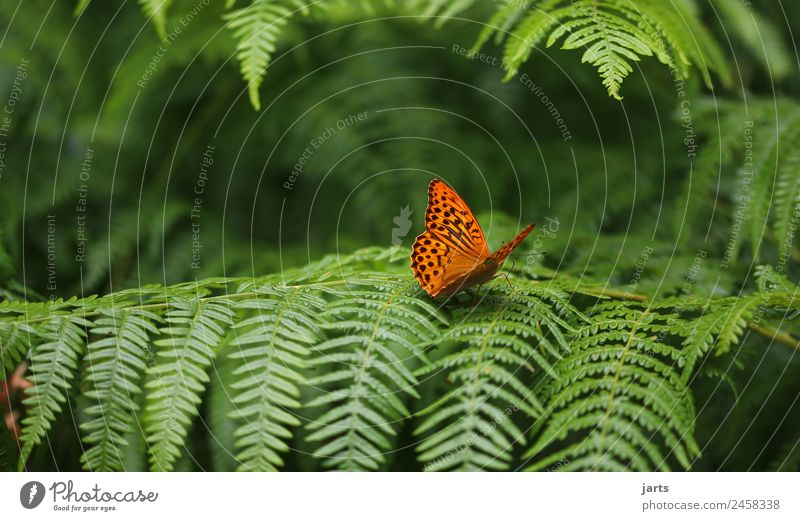 one Plant Animal Beautiful weather Forest Wild animal Butterfly 1 Natural Green Orange Nature Silver-washed fritillary Colour photo Exterior shot Close-up