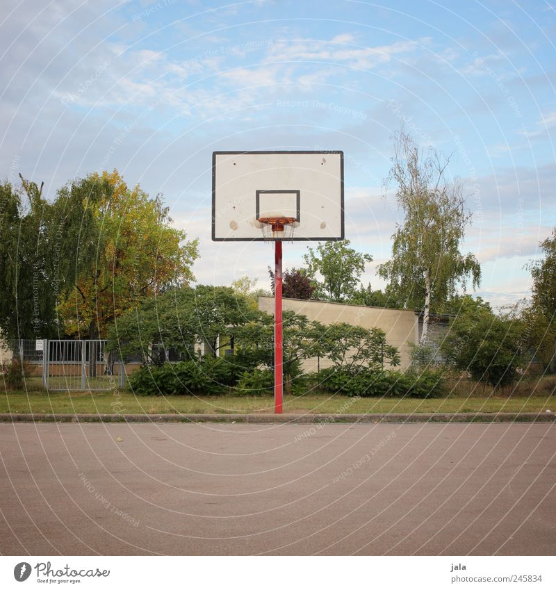 basket Leisure and hobbies Sports Ball sports Basketball basket Basketball arena Environment Nature Sky Plant Tree Grass Bushes Places Colour photo