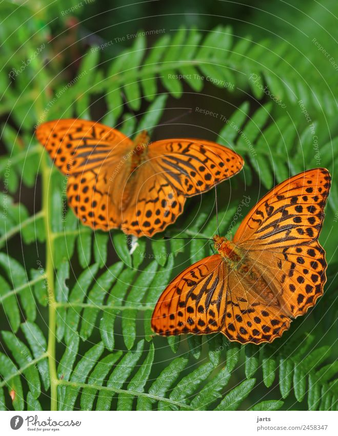 Together Nature Plant Animal Summer Beautiful weather Fern Forest Wild animal Butterfly 2 Pair of animals Free Colour photo Exterior shot Close-up Deserted