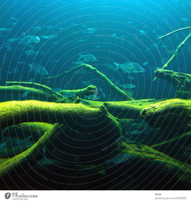 SWARM INTELLIGENCE Water Branch Underwater plant Algae Fish Zoo Aquarium Flock Swimming & Bathing Blue Multicoloured Green Colour photo Underwater photo