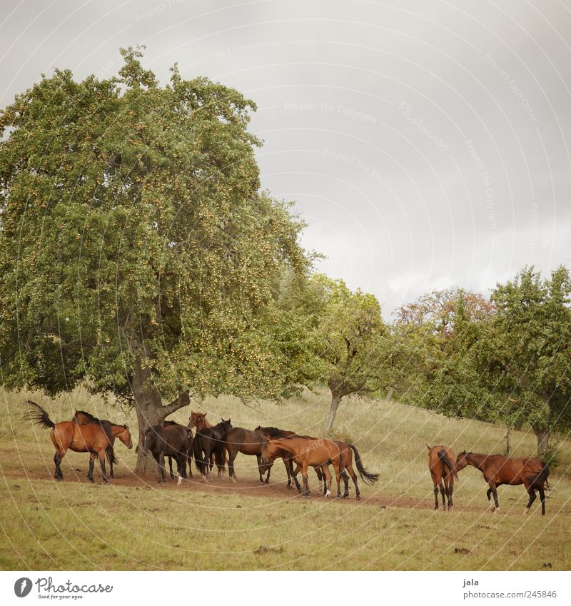 Sky Nature Tree Green Beautiful Plant Animal Meadow Grass Landscape Environment Brown Horse Esthetic Bushes Natural