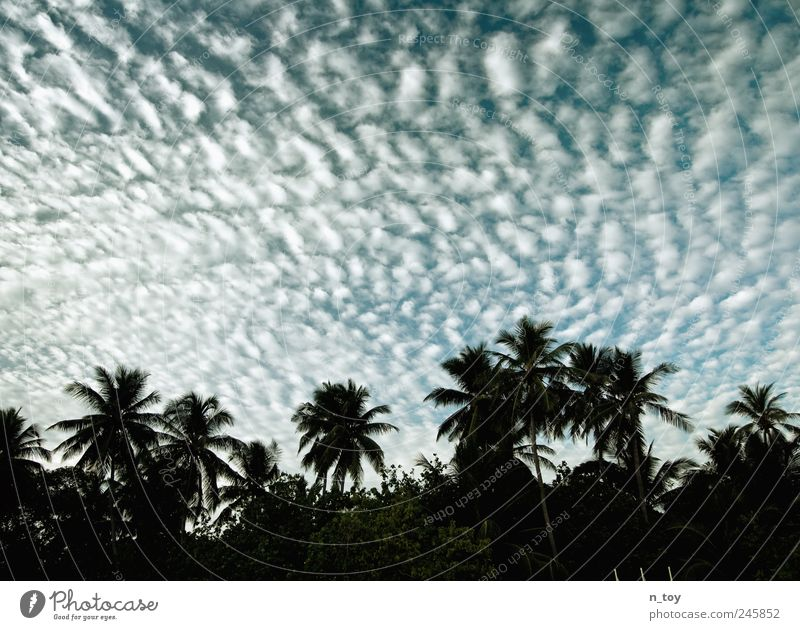Sky Vacation & Travel Ocean Clouds Far-off places Freedom Coast Tourism Island Asia Palm tree Exotic Summer vacation Maldives Clouds in the sky Atoll