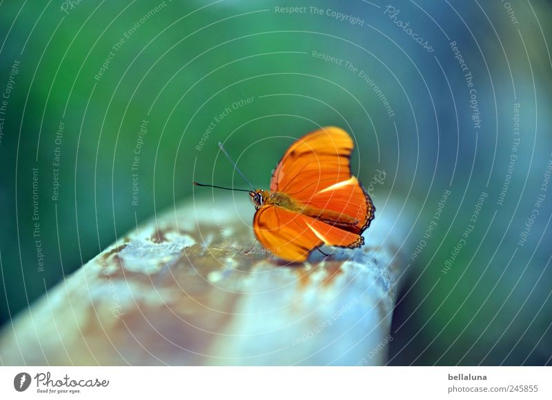 Balance? Nature Animal Wild animal Butterfly Wing 1 Esthetic Exceptional Elegant Exotic Fantastic Beautiful Uniqueness Near Natural Blue Brown Multicoloured