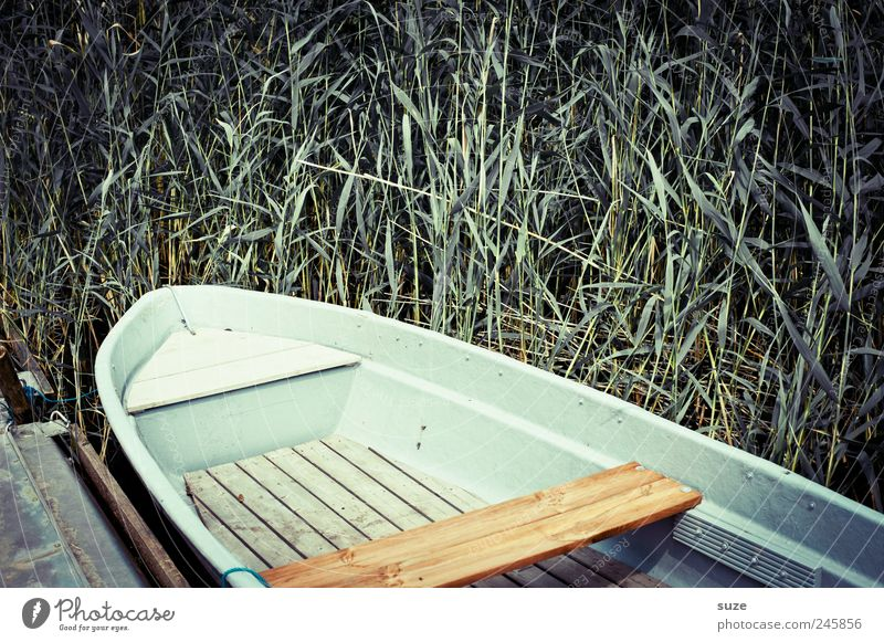 Nature Green Plant Summer Loneliness Wood Environment Coast Watercraft Weather Lie Common Reed Footbridge Lakeside Rowboat Peaceful