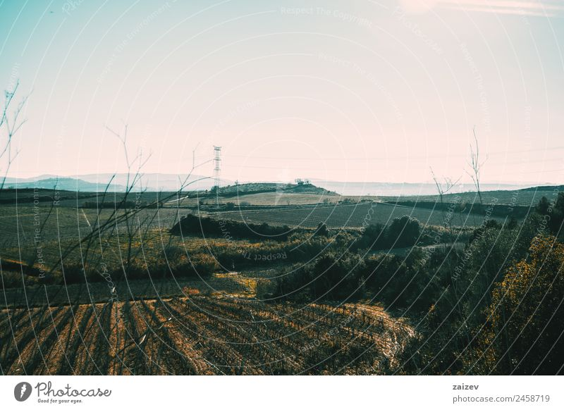Cloudless landscape with vineyard fields throughout the image Nature Vacation & Travel Blue Plant Colour Green Sun Landscape Tree Leaf Forest Mountain Dark