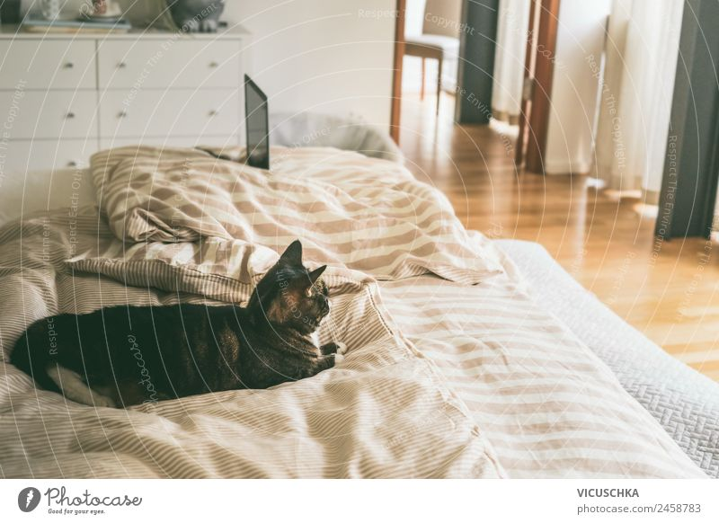 Cat in bed in bedroom Lifestyle Living or residing Flat (apartment) House (Residential Structure) Bed Bedroom Animal Pet Design Colour photo Interior shot