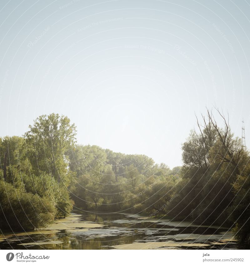 Sky Nature Tree Plant Landscape Environment Esthetic River Bushes Rhine Body of water Foliage plant Wild plant Aquatic plant