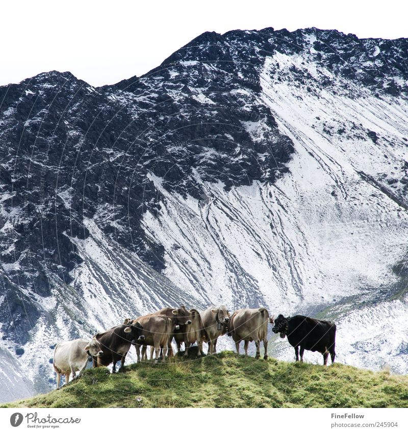 White Green Summer Joy Vacation & Travel Animal Relaxation Life Mountain Landscape Funny Wait Going Hiking Esthetic Perspective