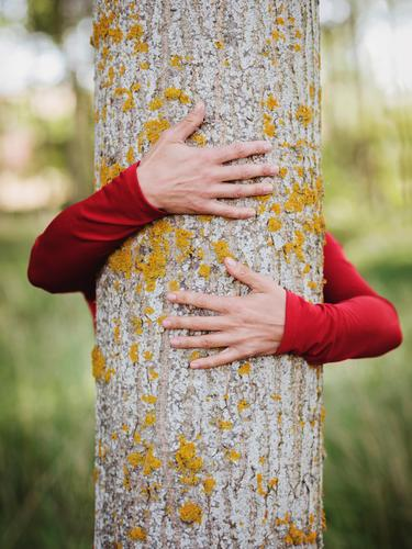 hands of woman hugging a tree Life Harmonious Meditation Human being Young woman Youth (Young adults) Woman Adults Arm Hand Fingers 1 30 - 45 years Environment