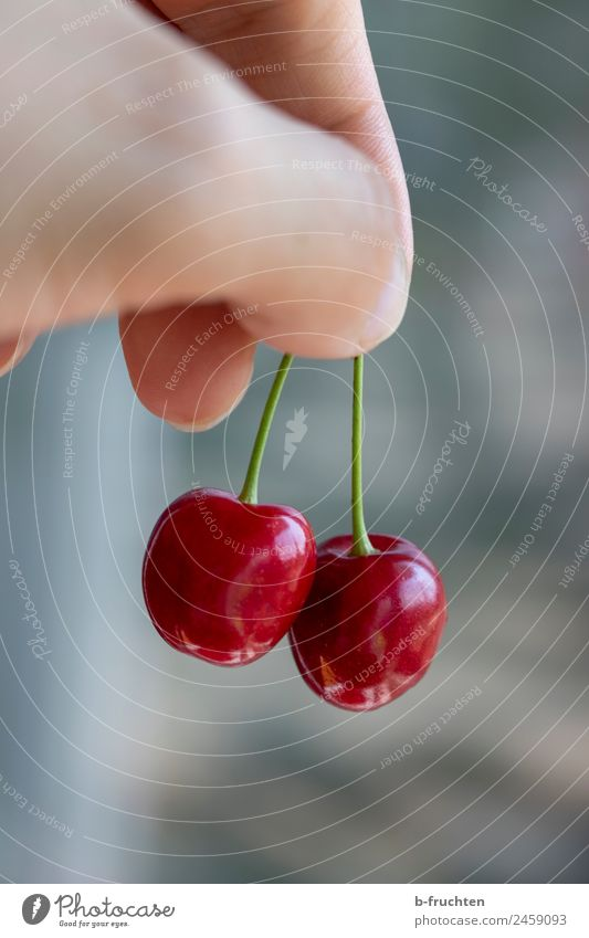 Cherries in a double pack Food Fruit Organic produce Man Adults Hand Fingers Summer Garden Select Touch To hold on Fresh Cherry In pairs Harvest Fruity