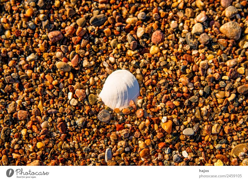 Vacation & Travel Beach Background picture Tourism Copy Space Design Baltic Sea Mussel Pebble Gravel beach Mussel shell