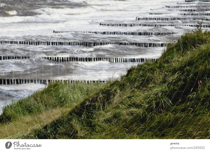 heavy sea Nature Landscape Plant Climate Weather Grass Wild plant Waves Coast Baltic Sea Water Blue Green Darss Ahrenshoop Wooden stake Gale Hill Ocean