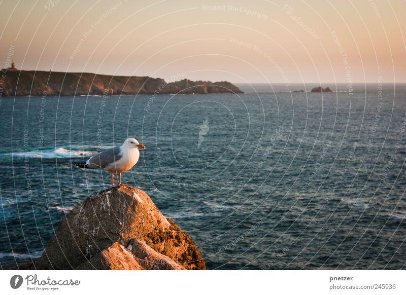 Nature Water Beautiful Summer Ocean Joy Animal Environment Emotions Happy Coast Air Weather Waves Bird Sit