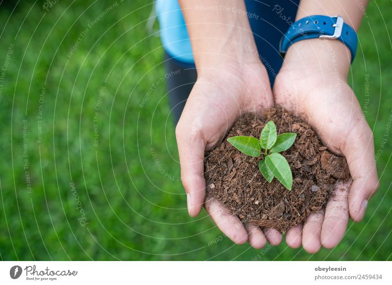 Children are planting tree Life Garden Success Gardening Business Baby Hand Environment Nature Plant Earth Tree Leaf Forest Drop Growth Fresh Small Natural New