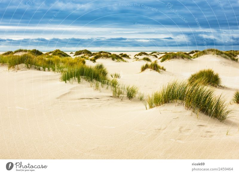 Landscape with dunes on the island of Amrum Relaxation Vacation & Travel Tourism Beach Ocean Island Nature Sand Clouds Autumn Coast North Sea Blue Yellow