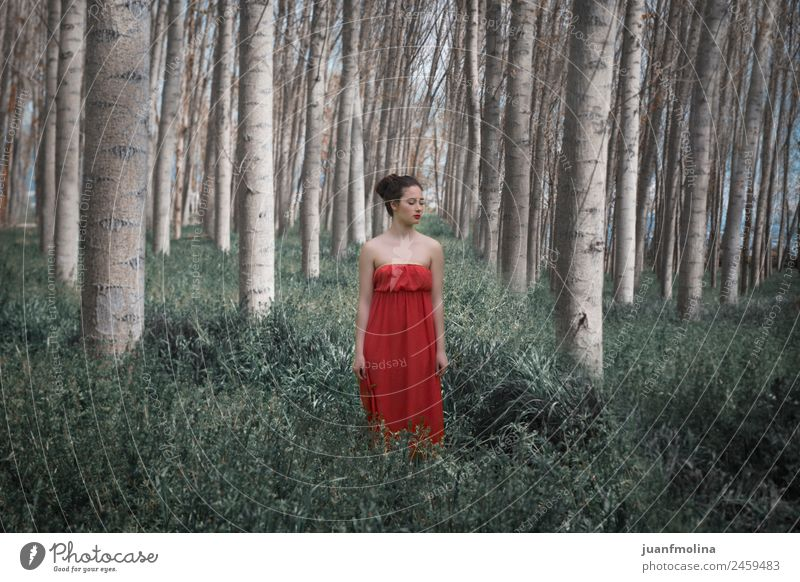 Girl in red dress in the forest Elegant Beautiful Woman Adults Nature Landscape Plant Tree Forest Fashion Dress Long Green Red Emotions Moody girl