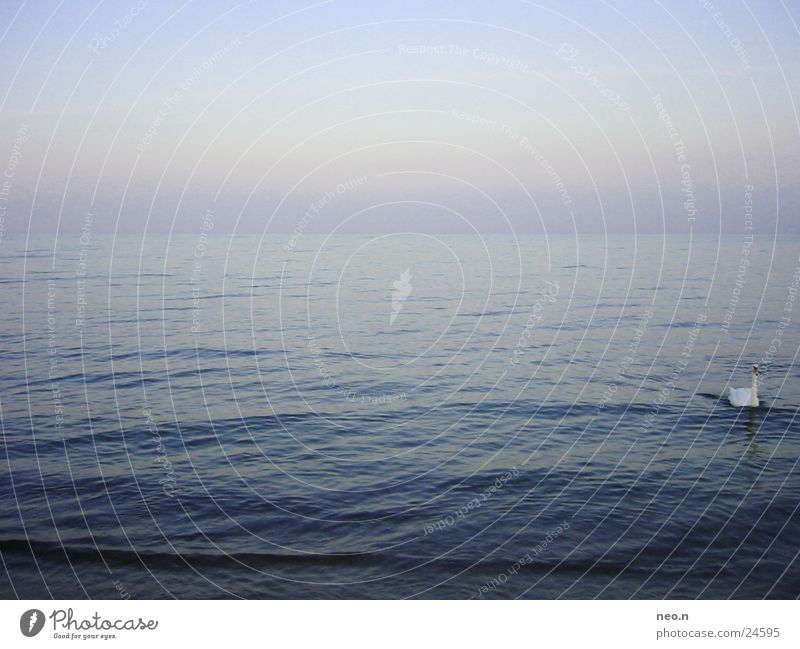 Blue Water Summer Ocean Far-off places Freedom Swimming & Bathing Horizon Waves Baltic Sea Cloudless sky Swan Horizontal Sea water Summer evening