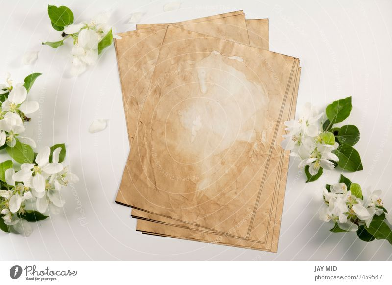 Old crumpled paper with white flowers white background Style Design Wedding Office Business Company Flower Paper Love Natural Retro Clean White Identity Mock-up