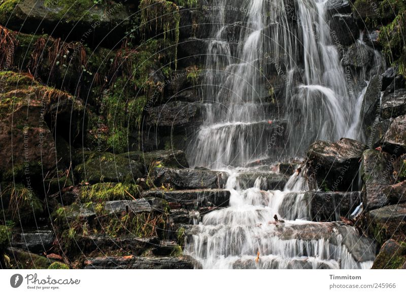 Nature Water Summer Calm Cold Emotions Environment Stone Park Esthetic Fluid Serene Joie de vivre (Vitality) Safety (feeling of) Waterfall Senses