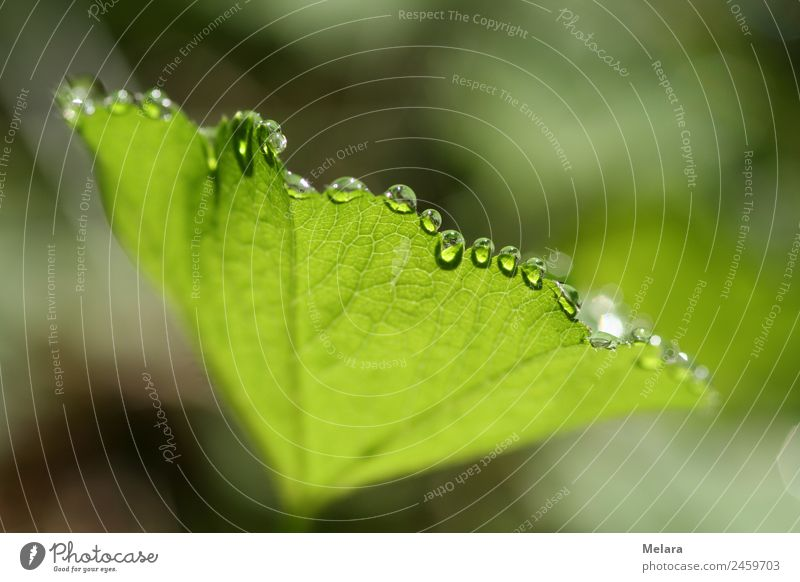 Dew drops on green leaf reflect in the sun Nature Plant Drops of water Sunlight Spring Beautiful weather Leaf Forest Esthetic Exceptional Green Idyll Transience