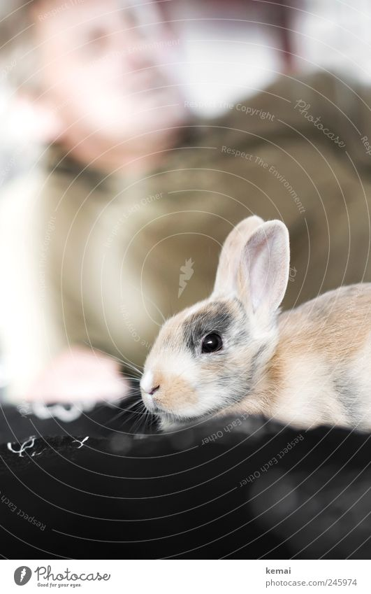 Animal Relaxation Bright Friendship Together Baby animal Sit Safety Cute Ear Animal face Pelt Hare & Rabbit & Bunny Pet Safety (feeling of) Easter Bunny