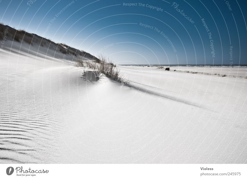 Sky White Blue Summer Beach Relaxation Landscape Sand Island North Sea Discover Beach dune Spiekeroog Marram grass