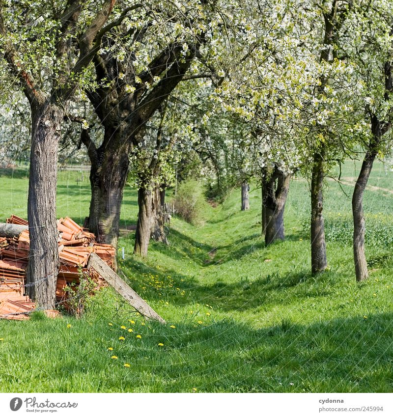Nature Beautiful Tree Loneliness Calm Relaxation Environment Landscape Life Meadow Freedom Movement Lanes & trails Spring Blossom Dream