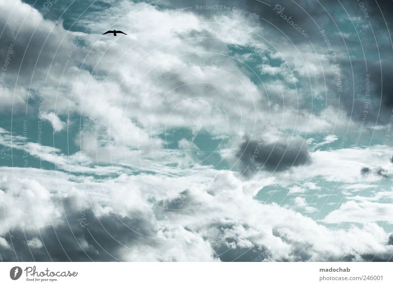 Sky Clouds Far-off places Animal Environment Bird Power Contentment Elegant Flying Esthetic Peace Serene Mobility