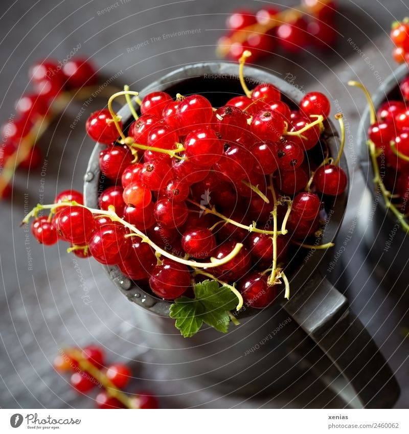juicy red currants in a zinc cup Redcurrant fruit Organic produce Food Vegetarian diet Mug Round Juicy Sour Gray green Picked Harvest Food photograph