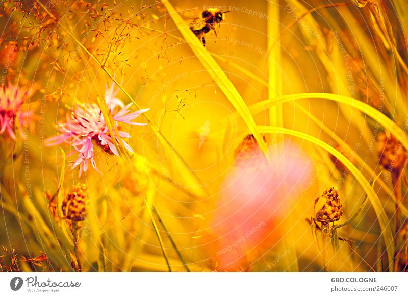 Nature Beautiful Plant Summer Animal Yellow Meadow Landscape Blossom Grass Happy Warmth Gold Flying Happiness Natural