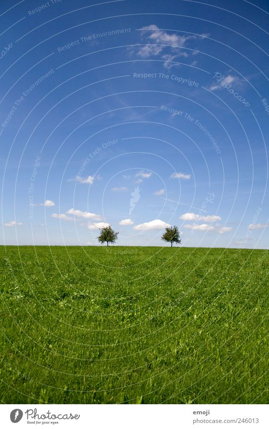 convergence Nature Landscape Sky Summer Beautiful weather Tree Grass Meadow Field Blue Green Simple 2 Natural Colour photo Exterior shot Deserted Copy Space top
