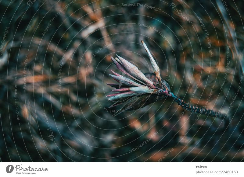 abstract nature in a dark environment with blurred background Design Beautiful Mountain Garden Wallpaper Environment Nature Plant Spring Autumn Leaf Park Meadow