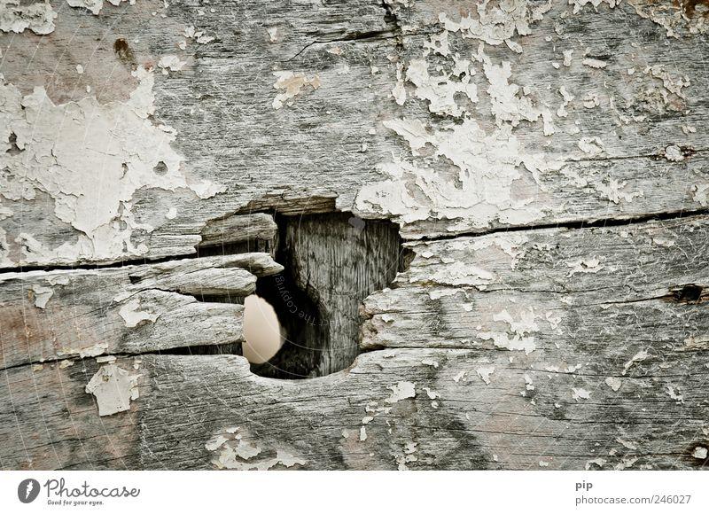 Old Wood Gray Dirty Broken Decline Trashy Hollow Crack & Rip & Tear Opening