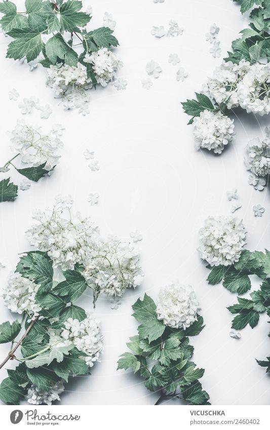 White flower frame Style Design Winter Feasts & Celebrations Nature Plant Flower Bushes Leaf Blossom Decoration Bouquet Pink Conceptual design