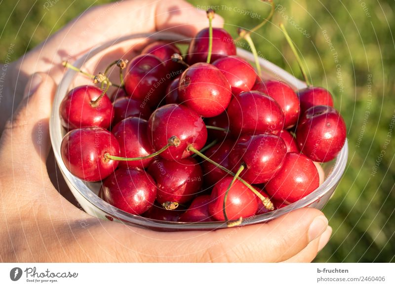 a bowl of cherries Food Fruit Organic produce Bowl Glass Hand Summer Garden To hold on Red Cherry Fruity Harvest Many Colour photo Exterior shot Close-up