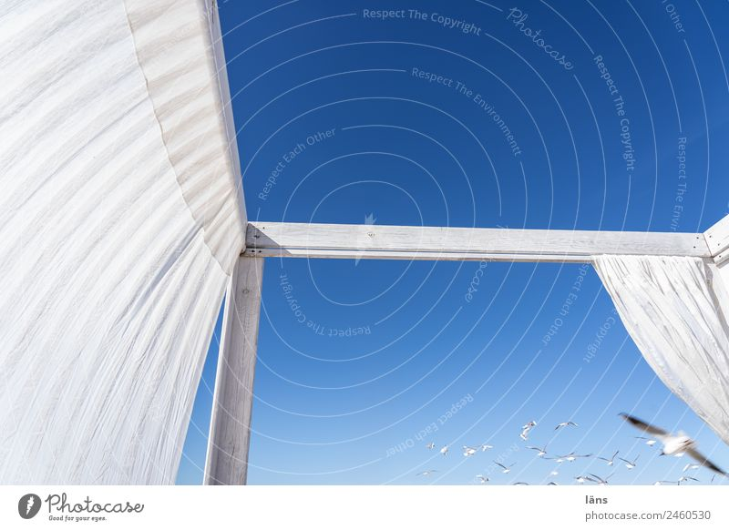 Sky Blue White Freedom Flying Seagull Weather protection