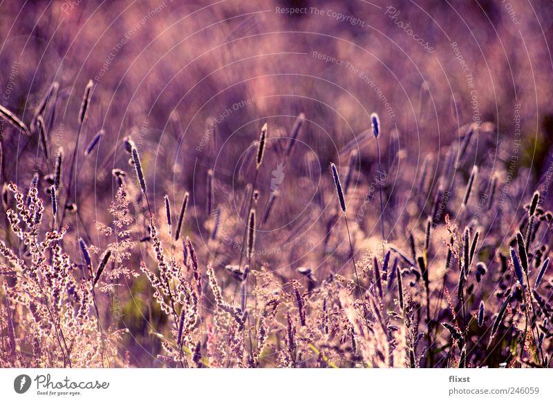 Summer Landscape Dream Field Contentment Bushes Beautiful weather Optimism