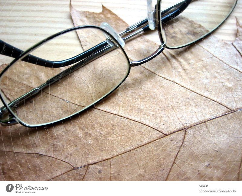 autumn glasses Nature Autumn Tree Leaf Eyeglasses Wood Natural Brown Intellectual Spectacle frame Maple tree Colour photo Interior shot Day Light