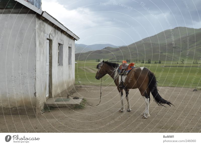 shopping Ride Landscape Animal Clouds Storm clouds Summer Wind Hill Mountain Steppe Mongolia House (Residential Structure) Building Facade Window Door
