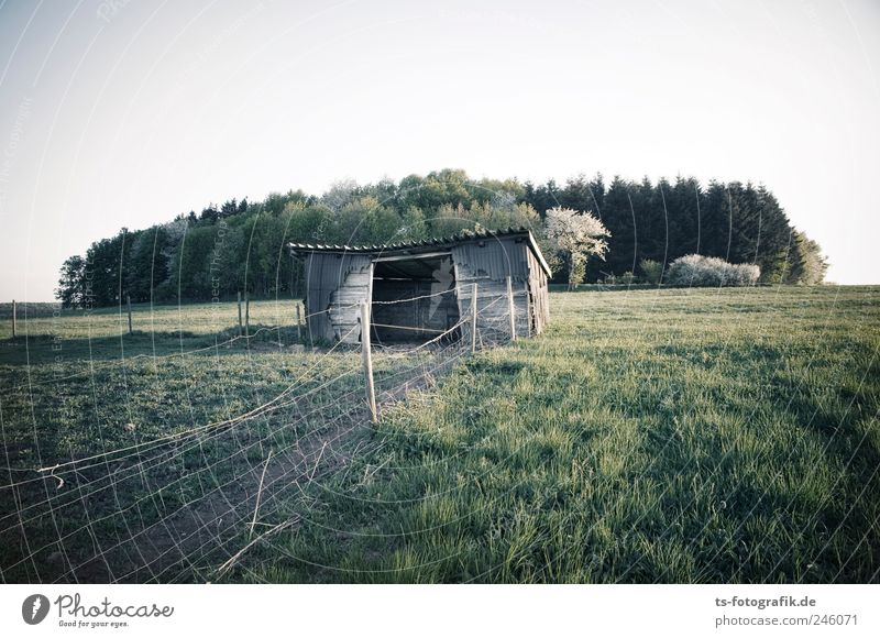 Nature Green Tree Plant Summer House (Residential Structure) Forest Environment Meadow Landscape Grass Earth Field Natural Agriculture Hut