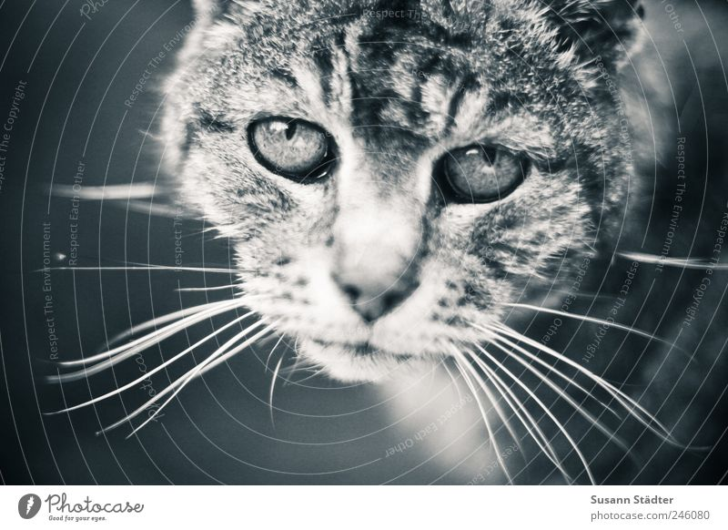 Old Animal Sadness Cat Grief Good Thin Distress Pet Concern Domestic cat Intensive Understanding Love of animals Black & white photo Human being