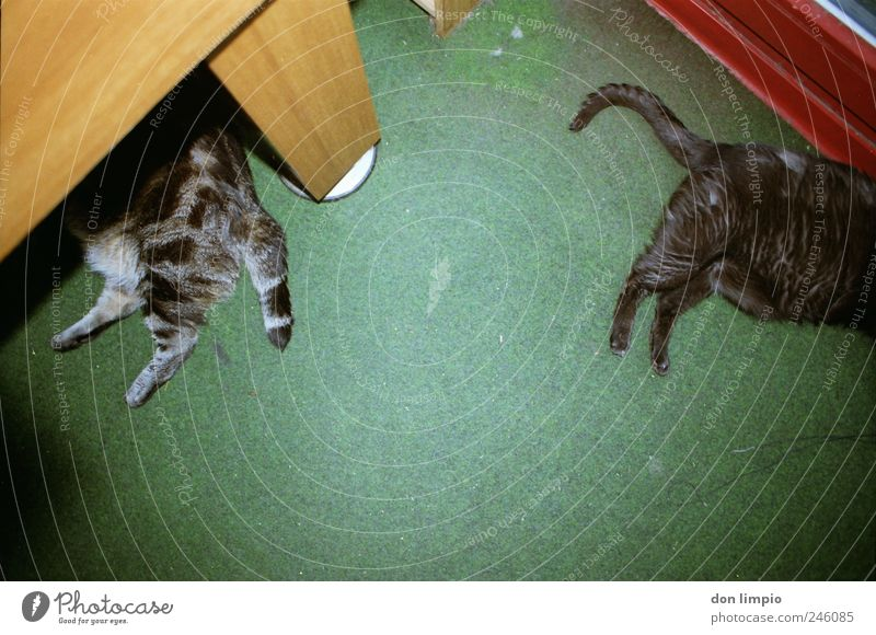 Green Calm Animal Relaxation Cat Together Sleep Lie Wild Under Serene Fat Fatigue Trashy Boredom Pet