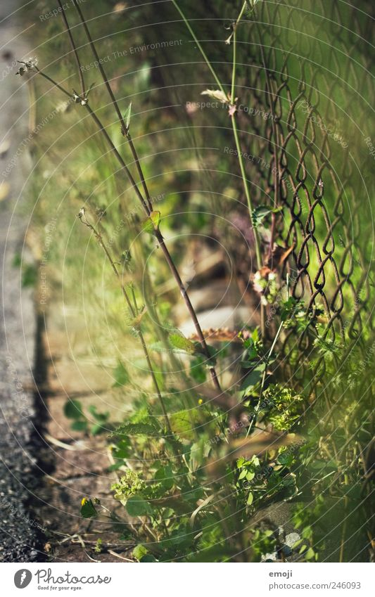 On the side of the road Nature Earth Beautiful weather Plant Grass Foliage plant Garden Park Natural Green Lanes & trails Wayside Asphalt Wire netting fence