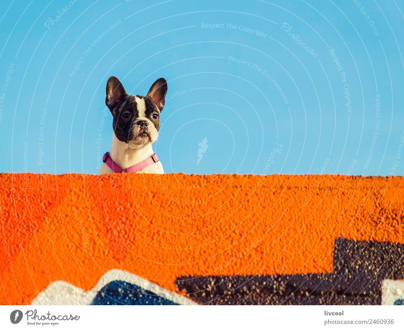 nice dog,anglet Relaxation Sun Beach Ocean Sky Clouds Rock Coast Lighthouse Animal Dog To enjoy Sunset France Basque Country euskal herria baske Europe la barre