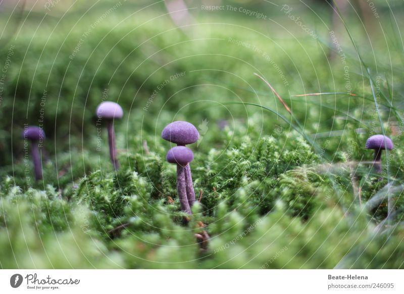 Bon appetit - the eye eats with you! Nature Plant Moss Touch Fragrance Delicious Natural Soft Green Violet Joy Relaxation To enjoy Mushroom purple